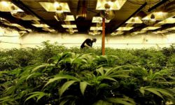 Read: Denver Security Provider Launches Specialized Program for Cannabis Industry