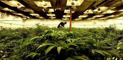 Denver Security Provider Launches Specialized Program for Cannabis Industry