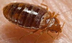 Controversy at SimpliSafe: Employees Suspended Amid Bedbug Infestation