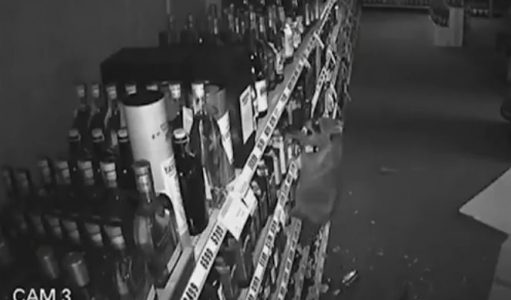 Top 9 Surveillance Videos of the Week: Raccoon Ransacks Liquor Store