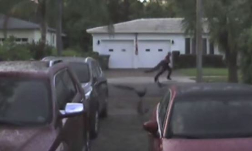 Top 9 Surveillance Videos of the Week: Man Steals Peacock, Gets Chased by Its Friends