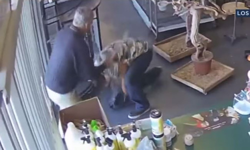 Top 9 Surveillance Videos of the Week: Bird Bandit Foiled by Store Owner