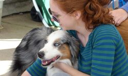 Read: Dog Care Center Receives Surveillance System Upgrade