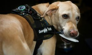Read: How Dogs Could One Day Trigger PERS Devices & Other Alarms