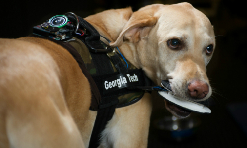 How Dogs Could One Day Trigger PERS Devices & Other Alarms