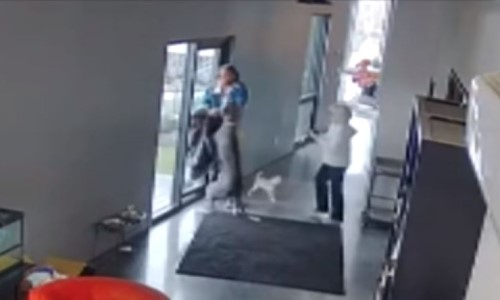 Top 9 Surveillance Videos of the Week: Great Dane Protects Owner From Home Intruder