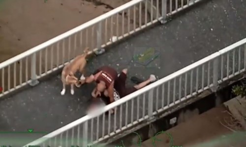 Top 5 Surveillance Videos of the Week: Dog-Walker Tackles Stolen Vehicle Suspect