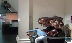 Top 5 Surveillance Videos of the Week: Man Breaks Into Museum to Take Selfies