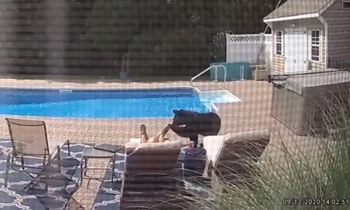 Top 9 Surveillance Videos of the Week: Bear Wakes Up Man Sleeping By Pool