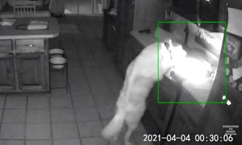 Top 9 Surveillance Videos of the Week: Hungry Dog Accidentally Starts House Fire