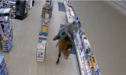 Read: Top 9 Surveillance Videos of the Week: Man Rides Horse Around Convenience Store