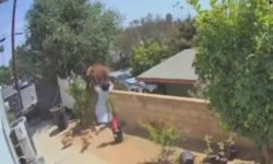 Top 9 Surveillance Videos of the Week: Teen Fends Off Bear to Protect Dogs