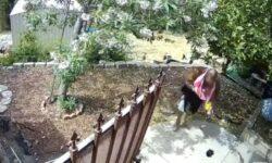 Top 9 Surveillance Videos of the Week: Burglar Swims in Pool, Picks Fruit From Tree